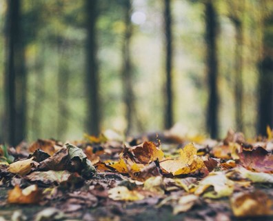 Fertilize in the fall season to replenish nutrients, relieve stress and promote a healthy growing tree.