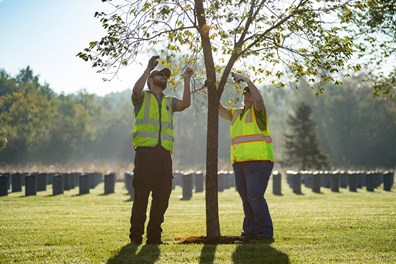 More than 1,100 arborists and tree care professionals across the nation provided tree care for 27 National Cemeteries to honor veterans.