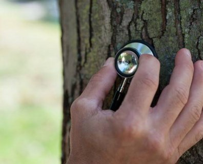 Now is the time to inspect your trees to prepare for a healthy growing season ahead.