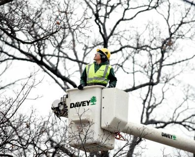 Knowing when to trim trees keeps them healthy in the long-term while setting them up for a season of robust growth.