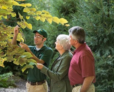 Ask yourself these three questions to determine how to hire a tree service that will keep your home and trees safe.