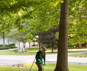 What would be the best way to advertise a tree or arbor care service online?