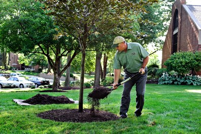 Take a tip from trees in the natural setting when you tackle mulching. Proper tree mulching helps trees retain water, combat weeds and regulate soil temperature.