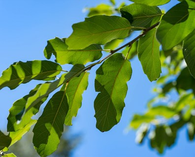 With over 23,000 types of trees, discover what type of tree you have in your yard.