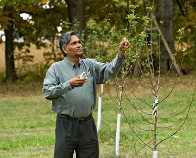 Wondering if you should prune your young tree? Find out how and when to prune your trees.