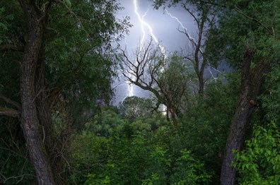 Learn how to how to tell if a tree was hit by lightning and what you can do to protect trees from lightning damage in the future.