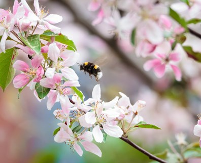 Include bees for trees when creating a pollinator garden! The best trees for bees are…
