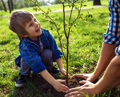 Recently planted a tree? Find all the tips you need for caring for newly planted trees below.