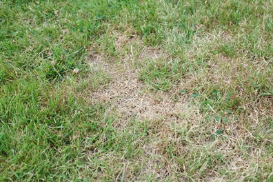 What's causing those brown spots in the lawn? Drought? Pests? Pets? Find out how to fix brown spots in the grass.