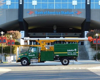 Davey local office provides pruning, fertilization, and plant health services for the Bank of America Stadium's trees.