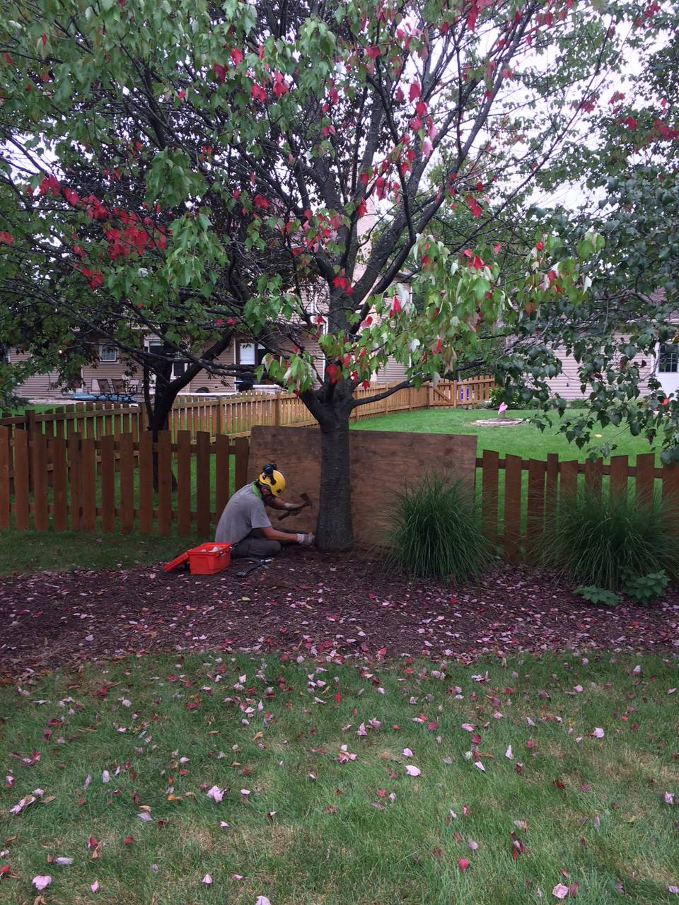 Wagners Tree Service Removing Tree Roots Above Ground