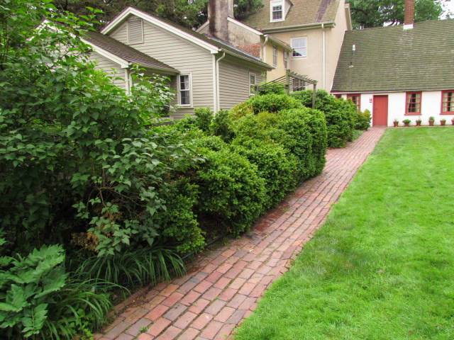 Wagners Tree Service - Landscape Design Idea for Privacy ...