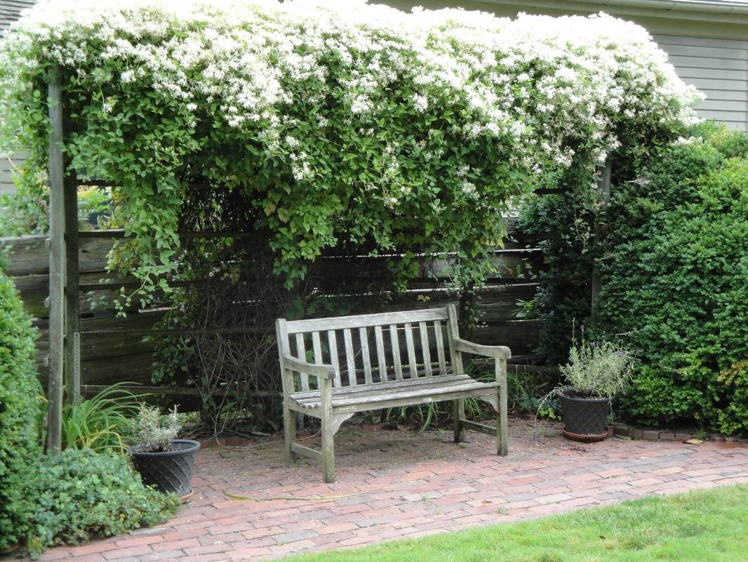 Privacy Landscape Ideas And The Best Landscaping Plants