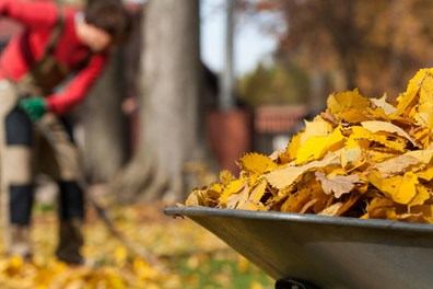 Gardens need to be prepared for the winter in order to be in top health come spring. Learn about dormant pruning and other winter prep tips…