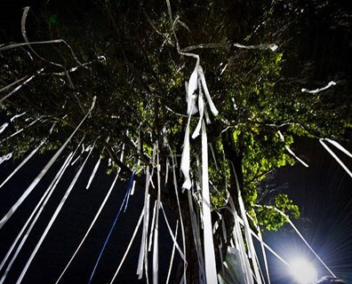 What is the best way to remove toilet paper from trees? Read on to find out!