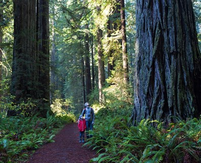 How do trees help us? Why plant trees? Other than providing the oxygen we breathe; trees provide us with many tree benefits. Read more about the importance of trees.