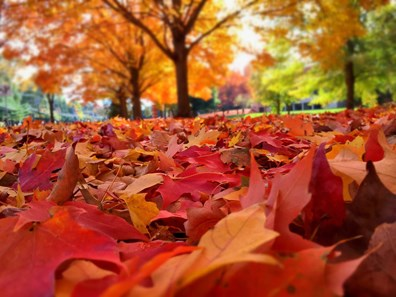 Have questions about fall tree and lawn care? Davey has compiled the most common tree questions with answers below.