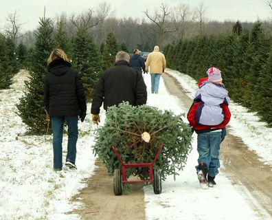 You've got your tree! Now, you've got to keep it alive all season! Here are the best care tips to keep your Christmas tree looking fresh from tree care industry experts.