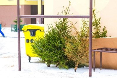 What should you do with your Christmas tree after the holidays? Don't trash it. Repurpose it.