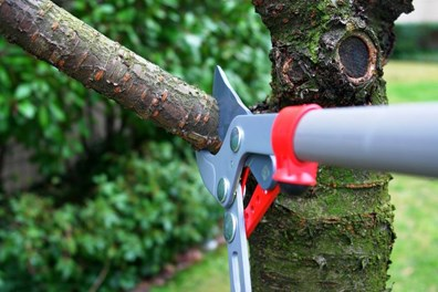 Now is the best time of year to prune your trees. Wondering what are the best tools for trimming trees? Find our essential tree trimming tools below: