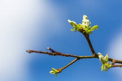 When can you expect to see new tree leaves come back in spring?