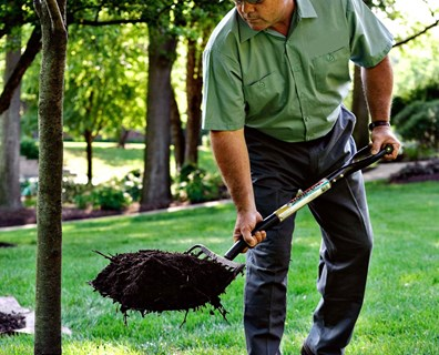 Spring is here! Discover why it's a good idea to properly mulch around trees to help them thrive year long.