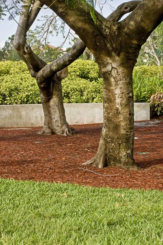 Wagners Tree Service Step By Step How To Remove Grass