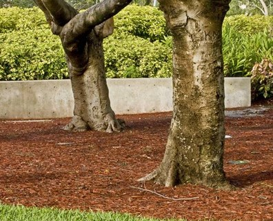 Grass around tree trunks can steal nutrients away from the tree. Here you can learn how to mulch around trees to remove grass.