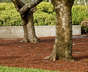 Landscaping pros and cons of rocks vs mulch davey blog for Landscaping rocks under trees