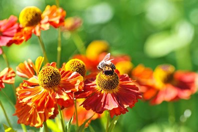 How to create a pollinator garden for pollinator week 2017.