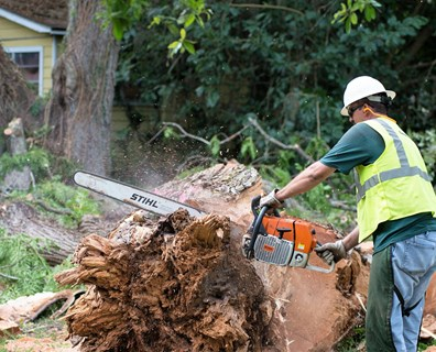 Thinking about DIY tree removal? Here's the best piece of DIY tree removal from the arborists at Davey Tree.