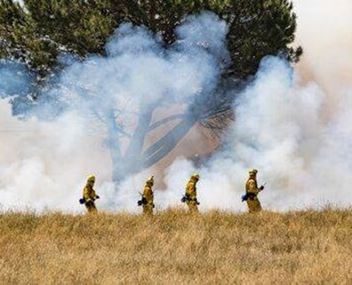 Learn what trees and shrubs are fire resistant in California.