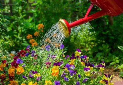 Learn the best time to water plants morning or night.