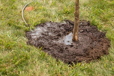 Stop watering trees with a watering can! Instead, DIY it with a 5-gallon bucket or DIY tree bag watering system.