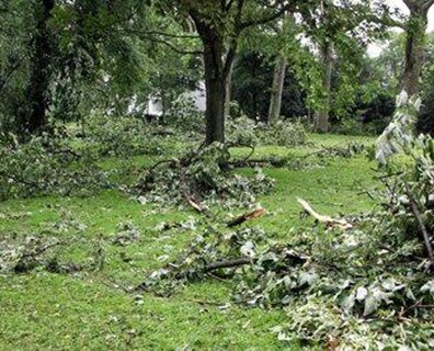 Learn exactly how to help your trees and landscape recover after a big storm.