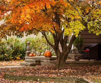 When Tree Leaves Change Color And Fall Northeast Midwest South West