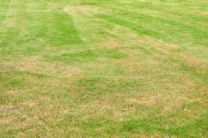 Wagners Tree Service Grass Turning Yellow After