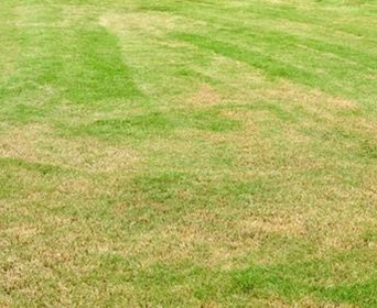 Grass Yellow After Fertilizing Here S How To Repair Davey Blog