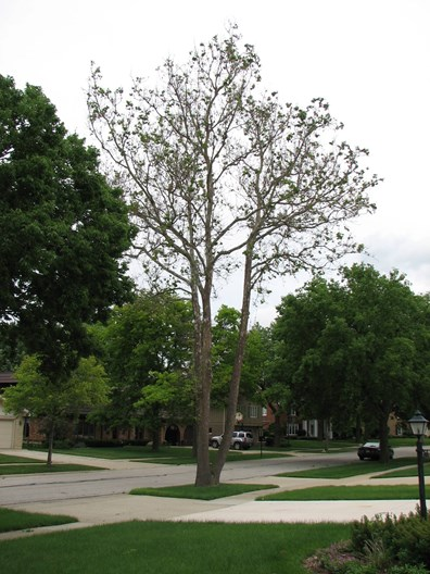 Learn the signs and symptoms of a stressed tree.