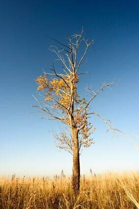 Learn how to determine if your tree is dead and how to save a dying tree.