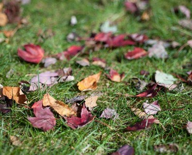 Learn the best way to remove leaves from your yard.