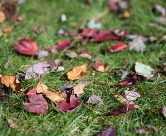 The Best Way To Clean Up Leaves Even In A Large Yard