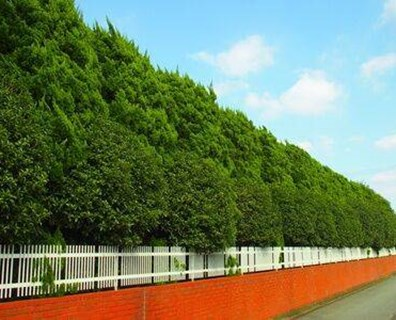 Learn about the best wind blocking trees by zone.