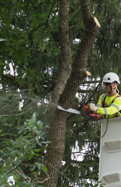 Wondering how much tree removal costs?