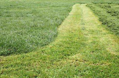 Learn what to do with grass clippings after mowing.
