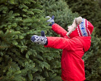 Learn about types of Christmas trees and their advantages.
