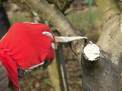 Once your tree is pruned, should you use pruning sealer on cuts?