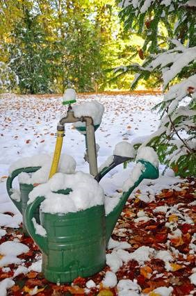 Learn if you should water newly planted and mature trees in the winter.