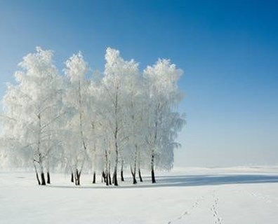 Can a tree freeze to death? At what temperature do trees freeze?