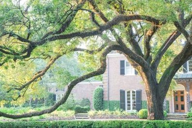 Learn how to keep your tree small and see if you can stunt your trees growth.